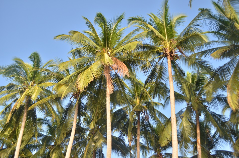 ternatebeach_palmtrees