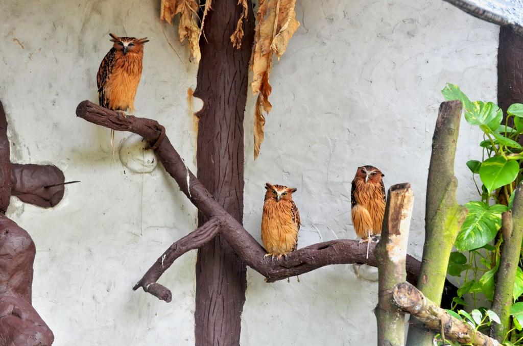 kuala_lumpur_bird_park