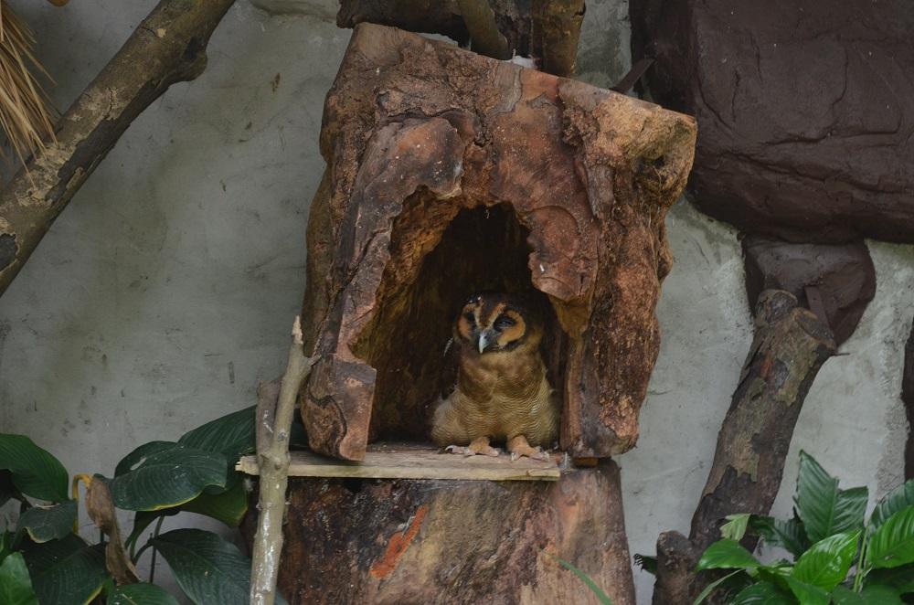 kuala_lumpur_bird_park_owls